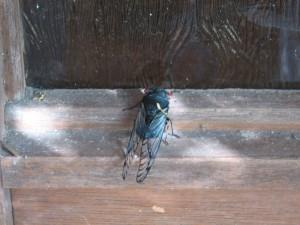 Black Prince at the door